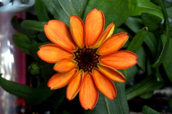 18 jan-flower in space 2.jpg