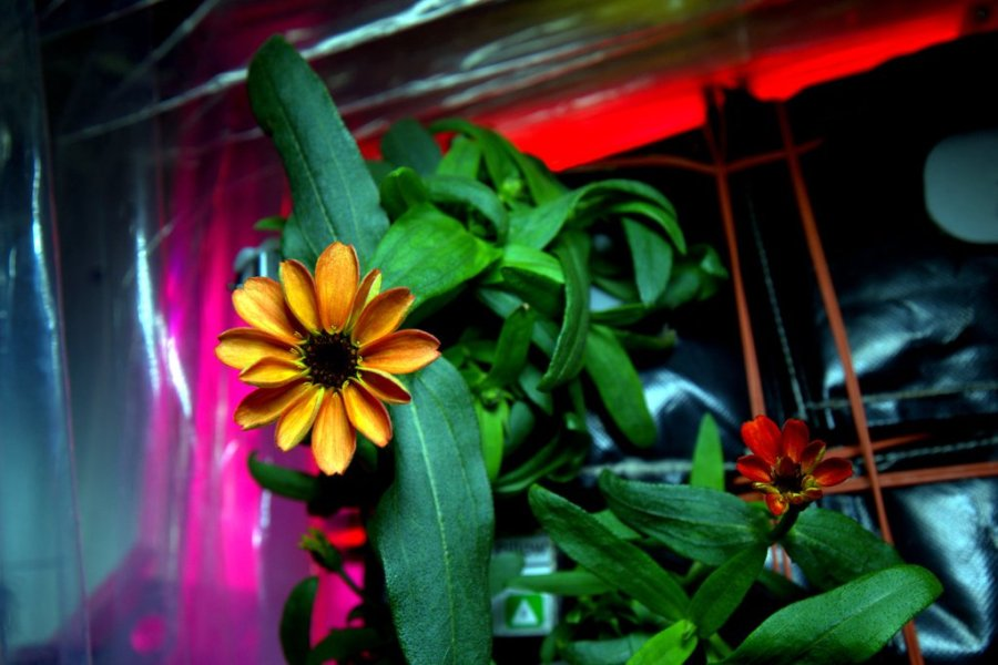 18 jan - flower in space 3.jpeg