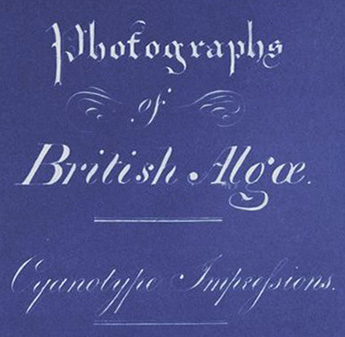 Anna_Atkins_Title_Page_of_Photographs_of_British_Algae_Cyanotype_Impressions_(Detail).jpg
