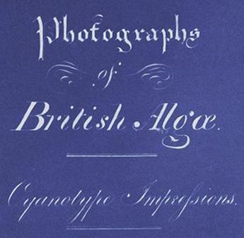 Anna_Atkins_Title_Page_of_Photographs_of_British_Algae_Cyanotype_Impressions_(Detail).jpg